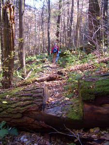Hiking in Ramsey Draft, West Virginia